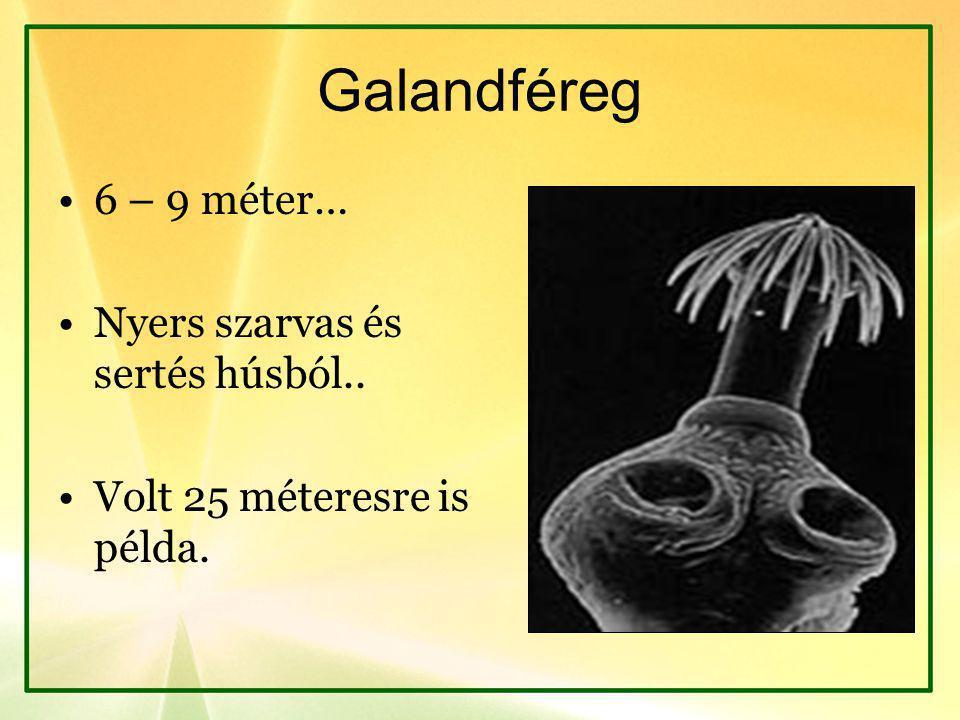 Galandféreg 6 – 9 méter… Nyers szarvas és sertés húsból..