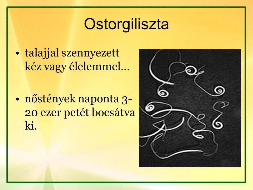 Ostorgiliszta talajjal szennyezett kéz vagy élelemmel…
