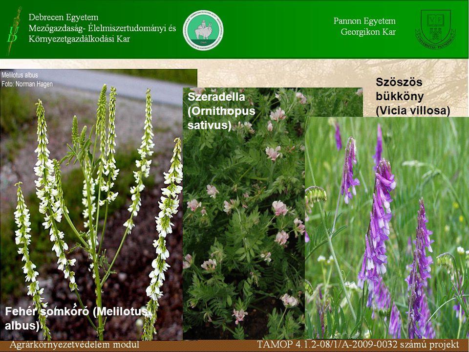 Szöszös bükköny (Vicia villosa) Szeradella (Ornithopus sativus) Fehér somkóró (Melilotus albus)