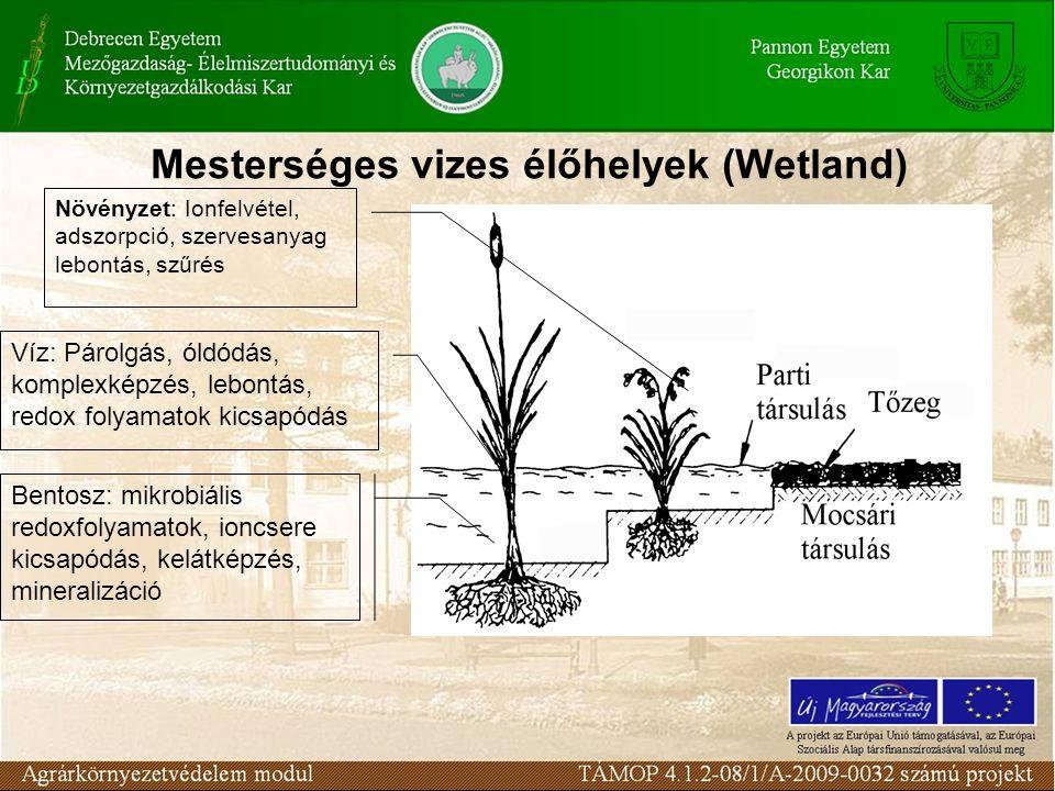Mesterséges vizes élőhelyek (Wetland)
