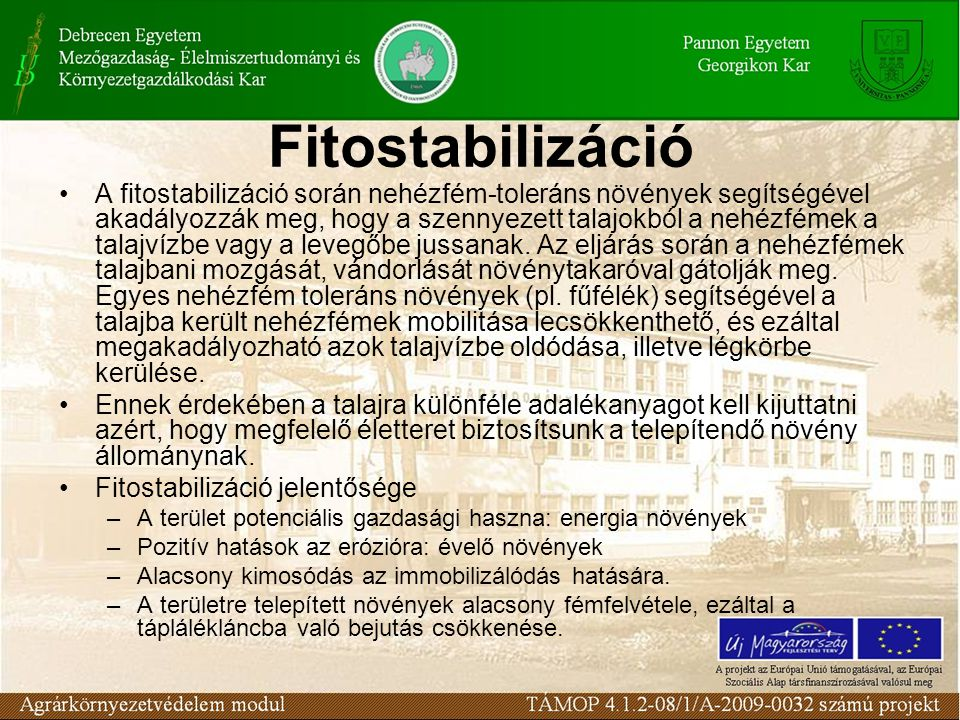 Fitostabilizáció