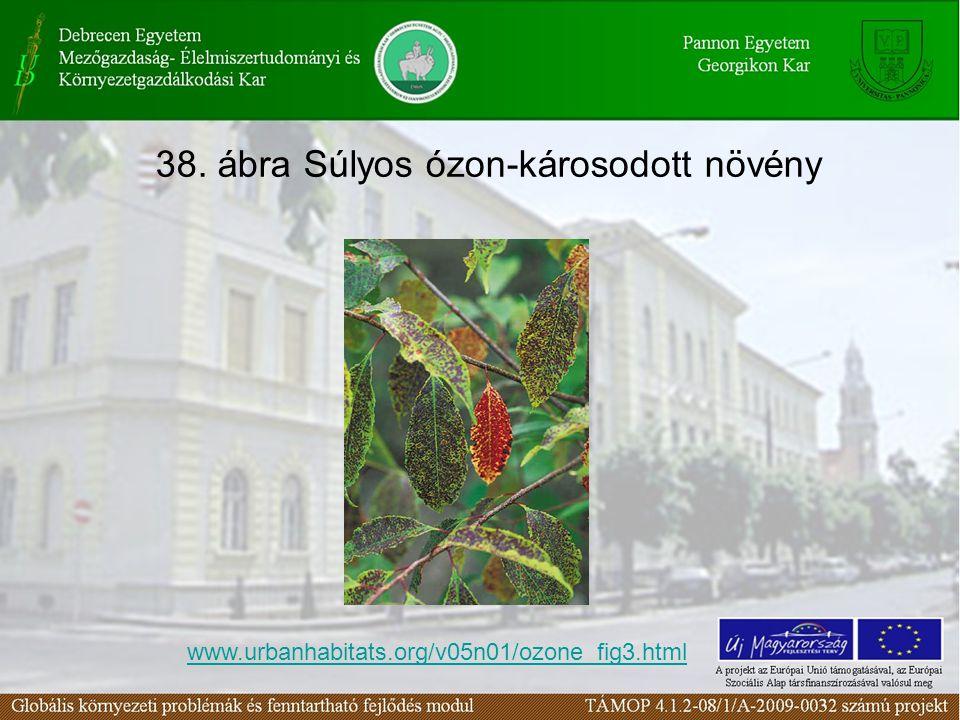 38. ábra Súlyos ózon-károsodott növény