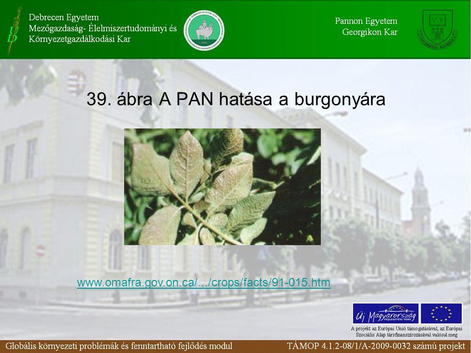 39. ábra A PAN hatása a burgonyára