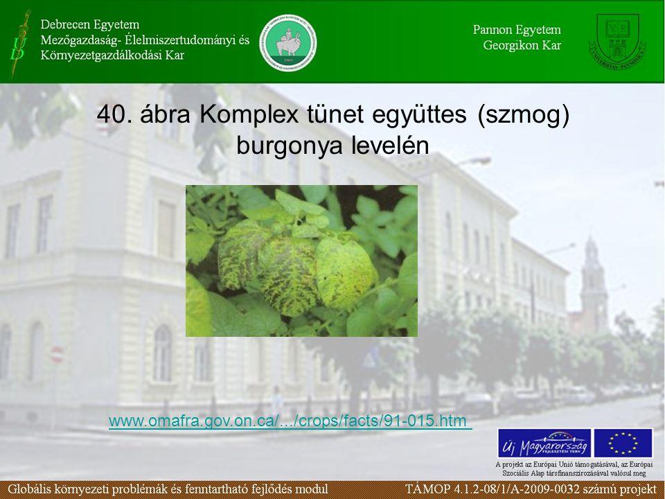 40. ábra Komplex tünet együttes (szmog) burgonya levelén