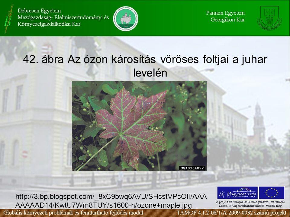 42. ábra Az ózon károsítás vöröses foltjai a juhar levelén