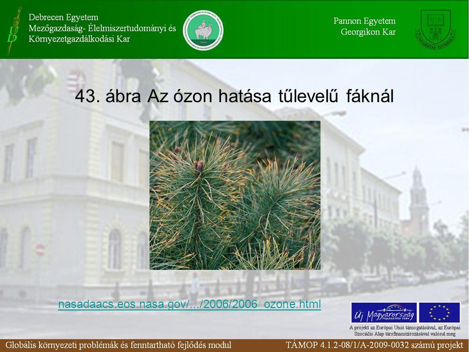 43. ábra Az ózon hatása tűlevelű fáknál
