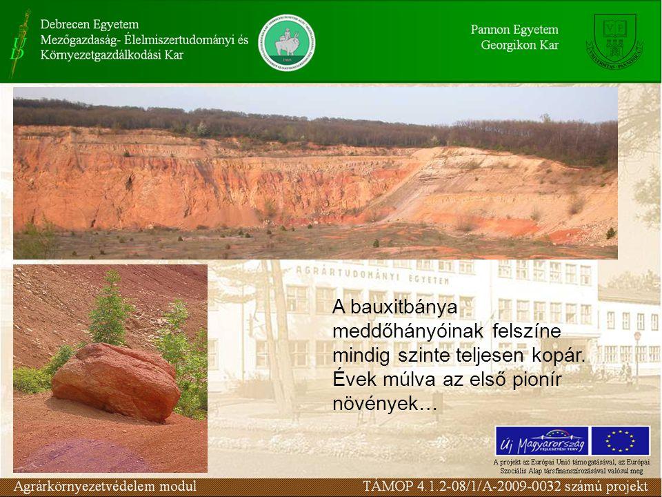 A bauxitbánya meddőhányóinak felszíne mindig szinte teljesen kopár
