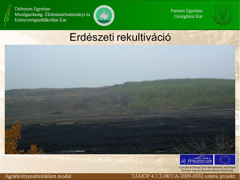 Erdészeti rekultiváció