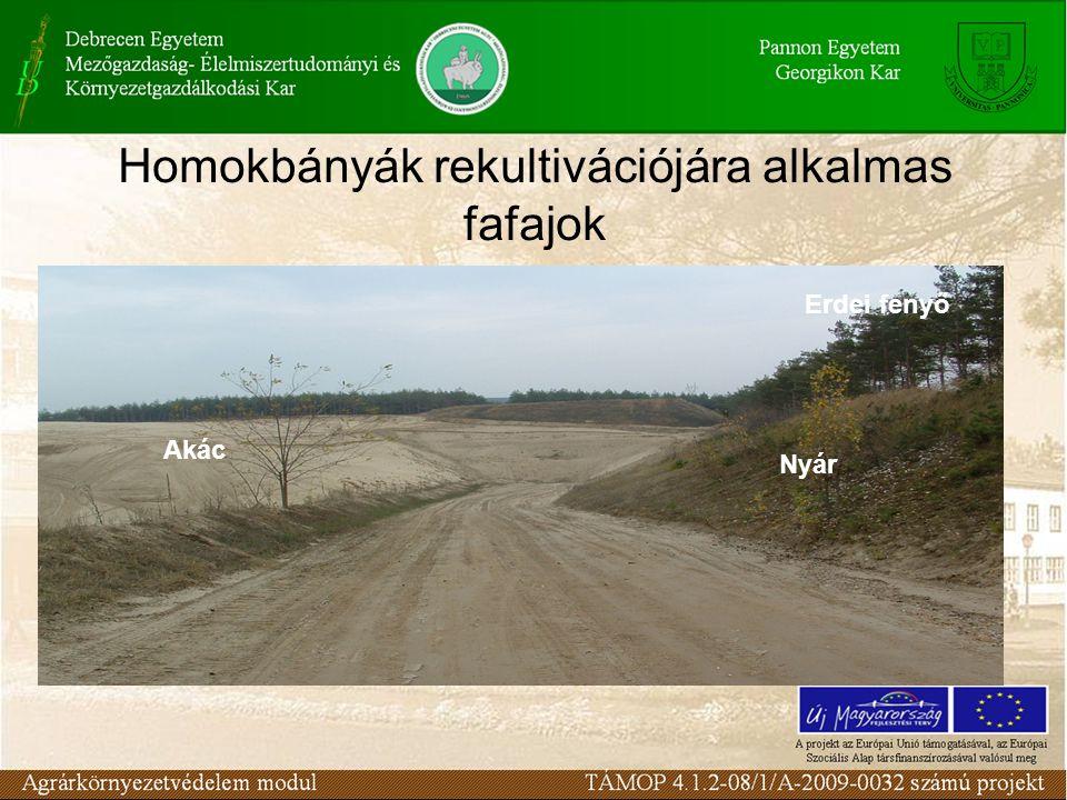 Homokbányák rekultivációjára alkalmas fafajok