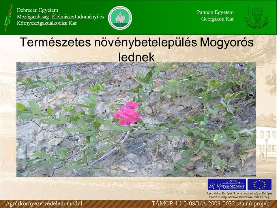 Természetes növénybetelepülés Mogyorós lednek