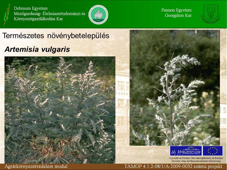 Természetes növénybetelepülés