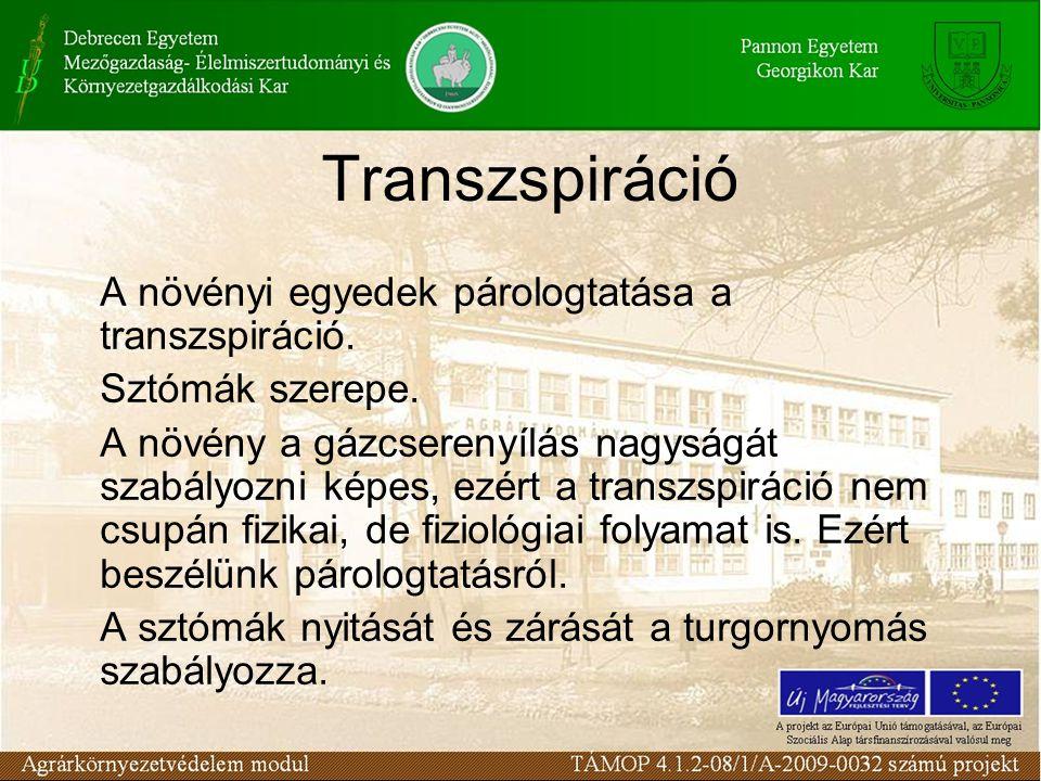 Transzspiráció A növényi egyedek párologtatása a transzspiráció.