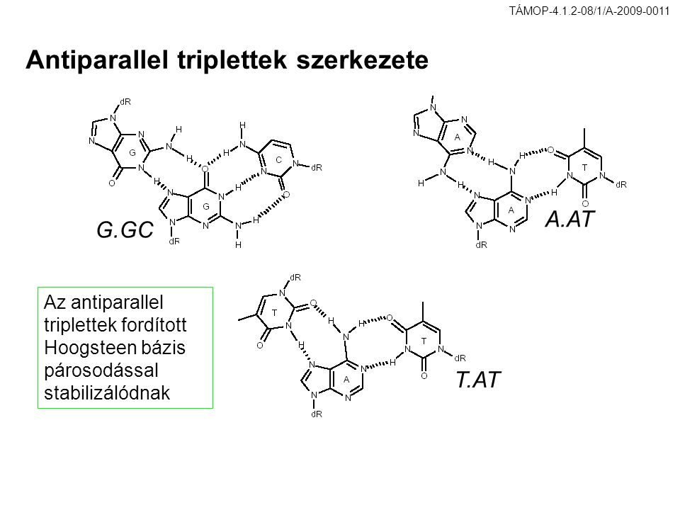 Antiparallel triplettek szerkezete