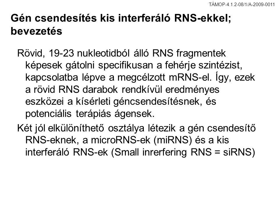 Gén csendesítés kis interferáló RNS-ekkel; bevezetés