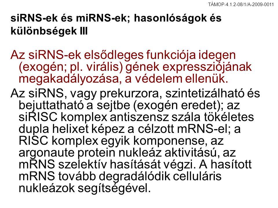siRNS-ek és miRNS-ek; hasonlóságok és különbségek III