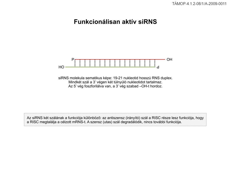 TÁMOP-4.1.2-08/1/A-2009-0011 36. ábra. Funkcionálisan aktív siRNS