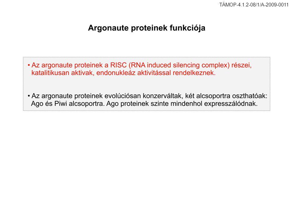 TÁMOP-4.1.2-08/1/A-2009-0011 37. ábra. Argonaute proteinek funkciója