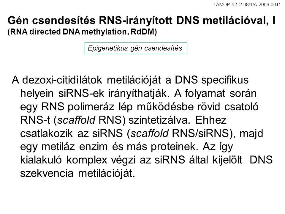 TÁMOP-4.1.2-08/1/A-2009-0011 Gén csendesítés RNS-irányított DNS metilációval, I (RNA directed DNA methylation, RdDM)