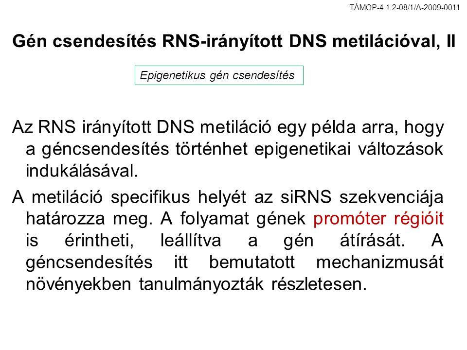 Gén csendesítés RNS-irányított DNS metilációval, II