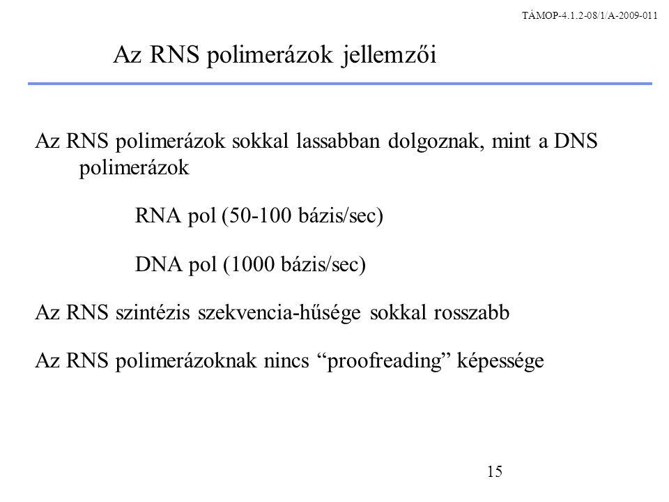 Az RNS polimerázok jellemzői