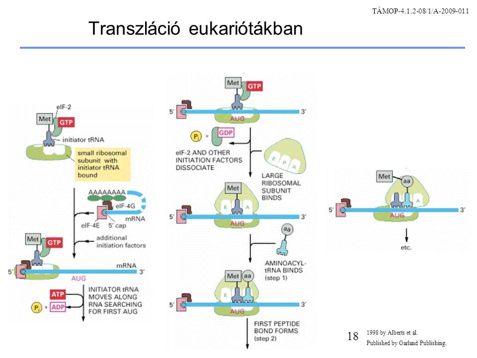 Transzláció eukariótákban