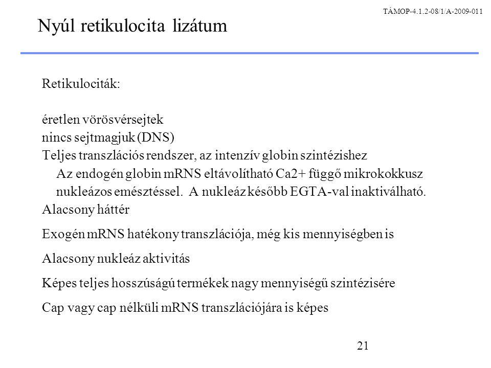 Nyúl retikulocita lizátum