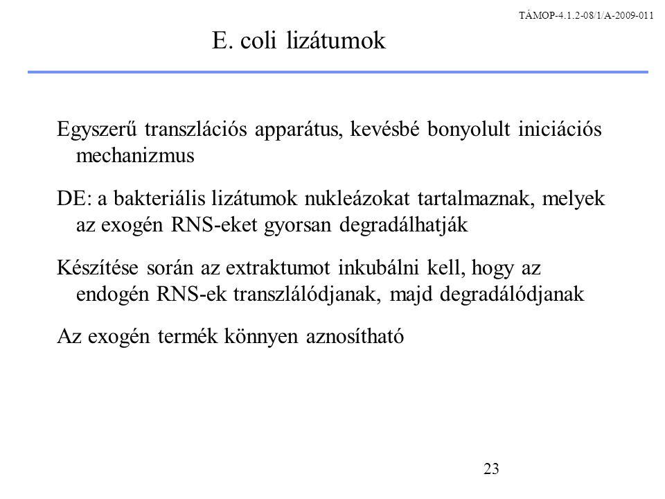 TÁMOP-4.1.2-08/1/A-2009-011 E. coli lizátumok. Egyszerű transzlációs apparátus, kevésbé bonyolult iniciációs mechanizmus.