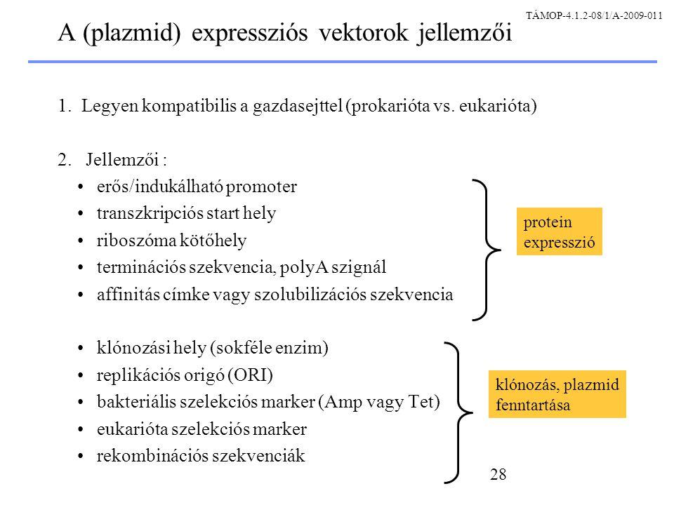 A (plazmid) expressziós vektorok jellemzői