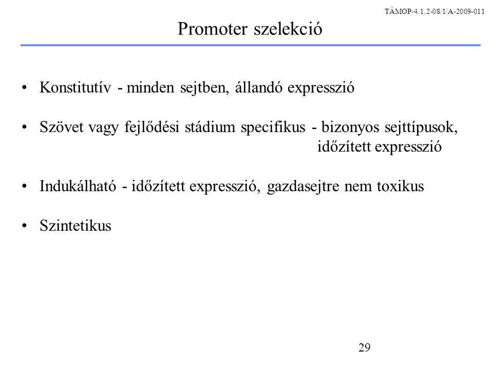 Promoter szelekció Konstitutív - minden sejtben, állandó expresszió