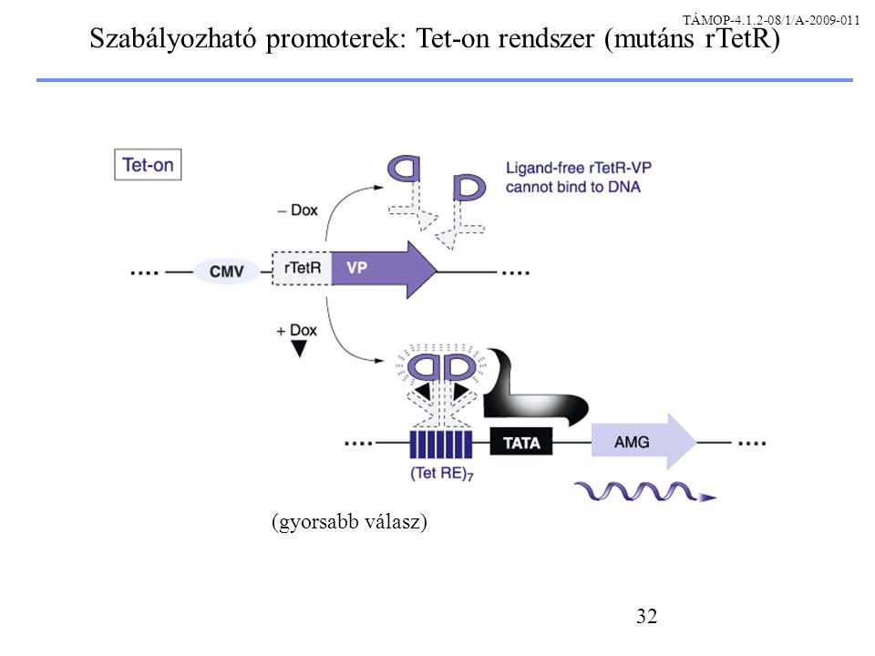 Szabályozható promoterek: Tet-on rendszer (mutáns rTetR)