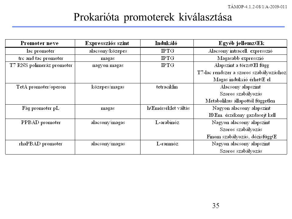 Prokarióta promoterek kiválasztása