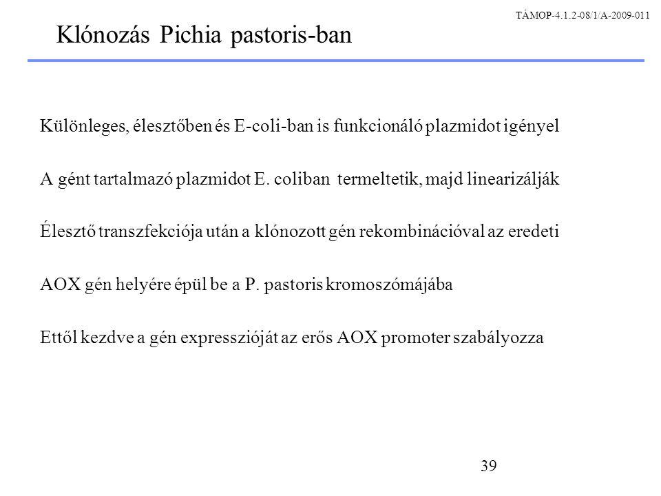 Klónozás Pichia pastoris-ban