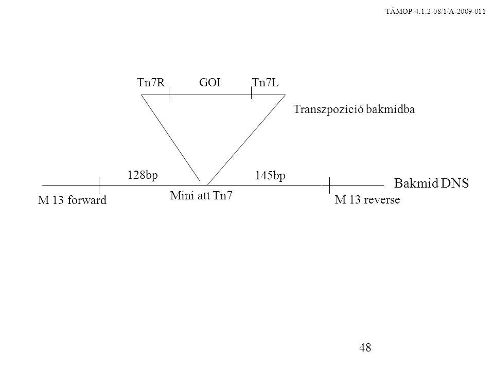Transzpozíció bakmidba
