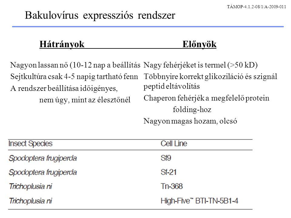 Bakulovírus expressziós rendszer