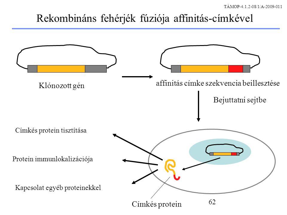 Rekombináns fehérjék fúziója affinitás-címkével