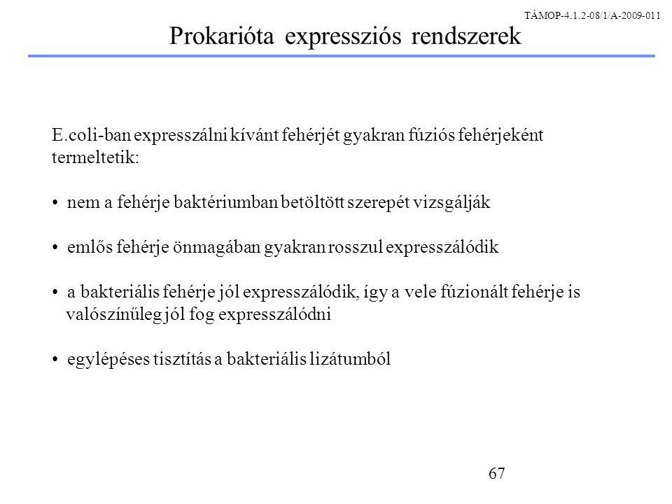 Prokarióta expressziós rendszerek