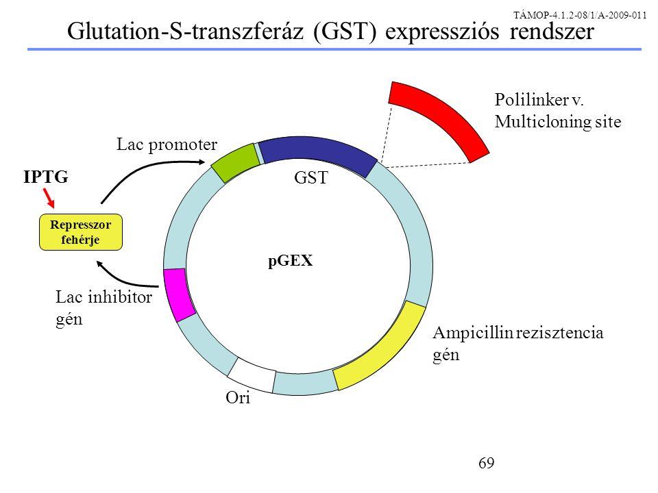 Glutation-S-transzferáz (GST) expressziós rendszer