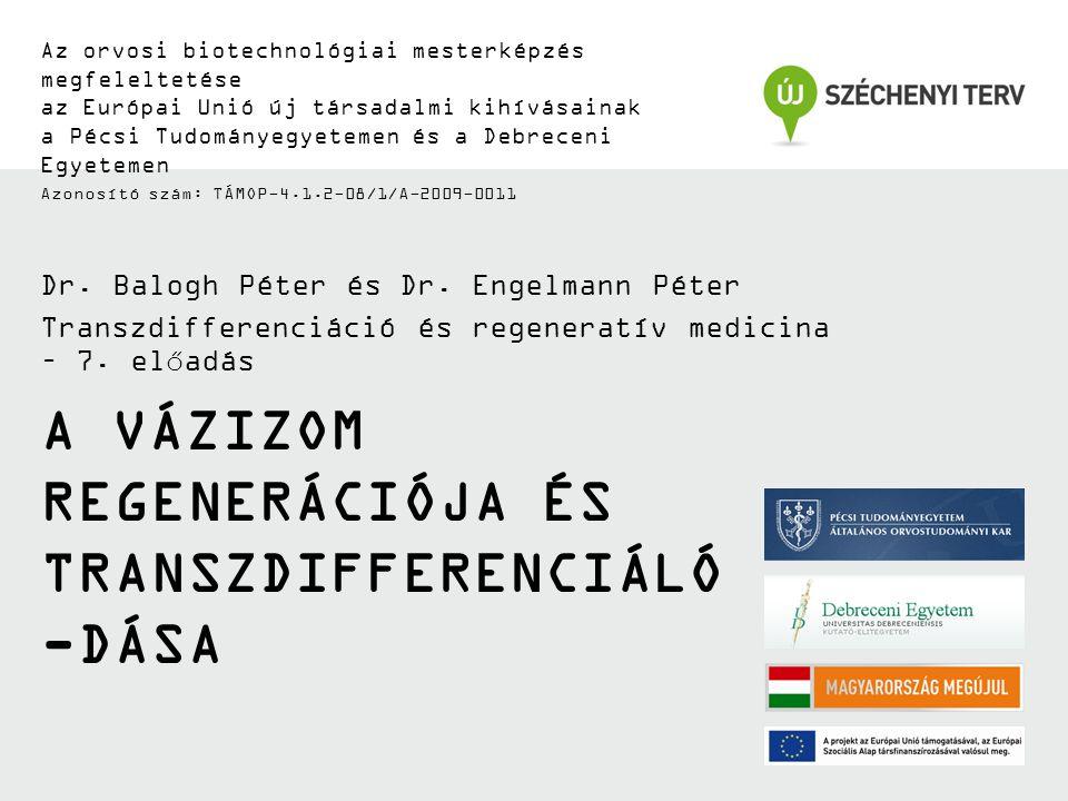 A vázizom regenerációja és transzdifferenciáló-dása
