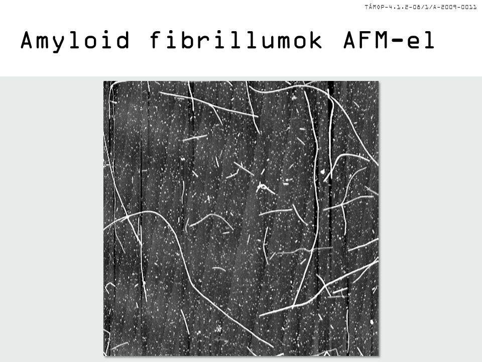 Amyloid fibrillumok AFM-el