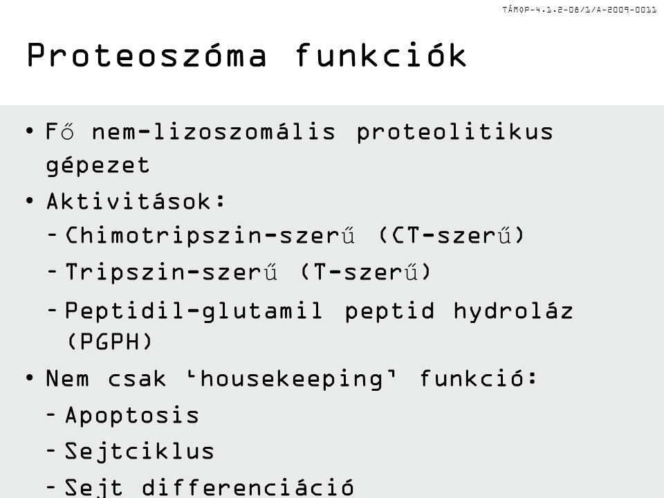 Proteoszóma funkciók Fő nem-lizoszomális proteolitikus gépezet