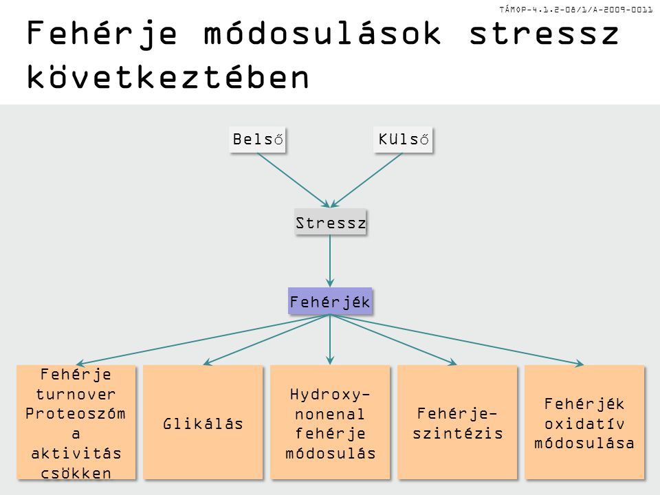 Fehérje módosulások stressz következtében