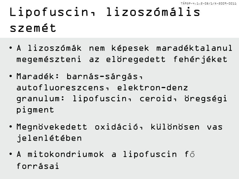 Lipofuscin, lizoszómális szemét