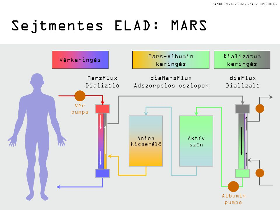 Mars-Albumin keringés