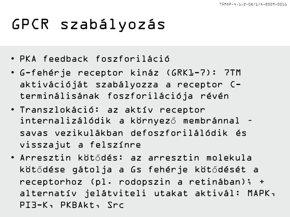 GPCR szabályozás PKA feedback foszforiláció