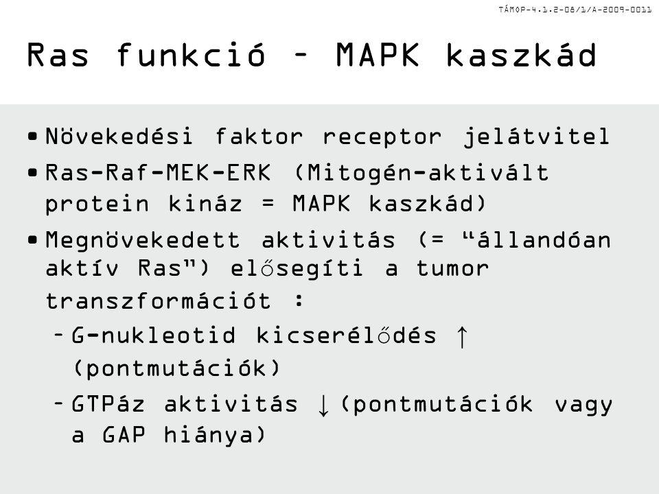 Ras funkció – MAPK kaszkád