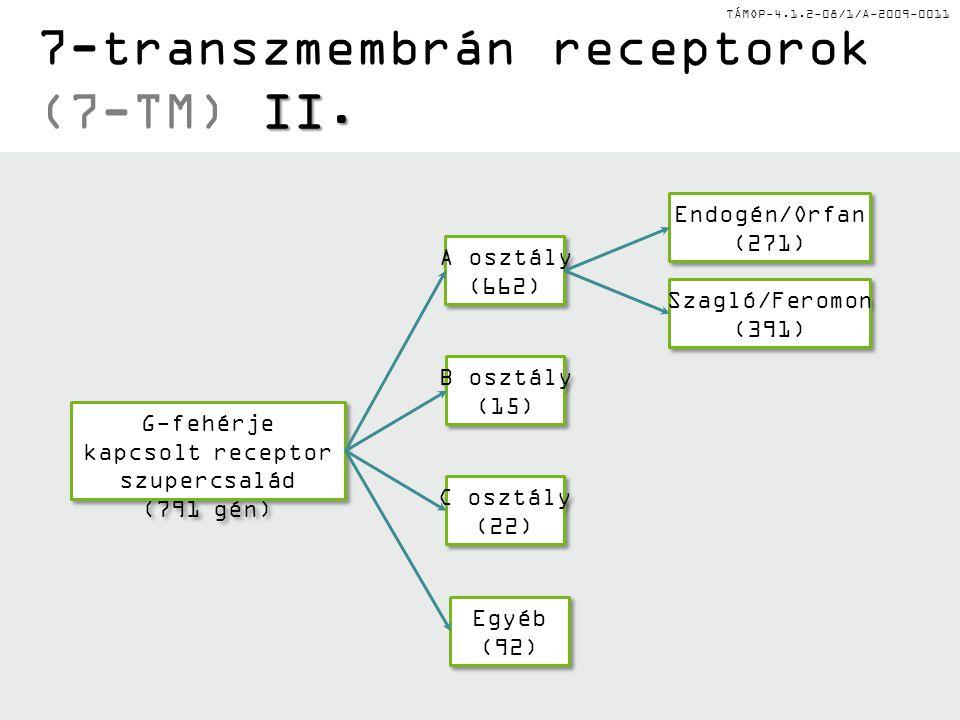 7-transzmembrán receptorok (7-TM) II.