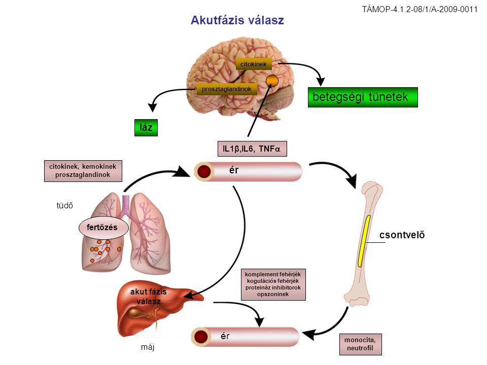 proteináz inhibitorok