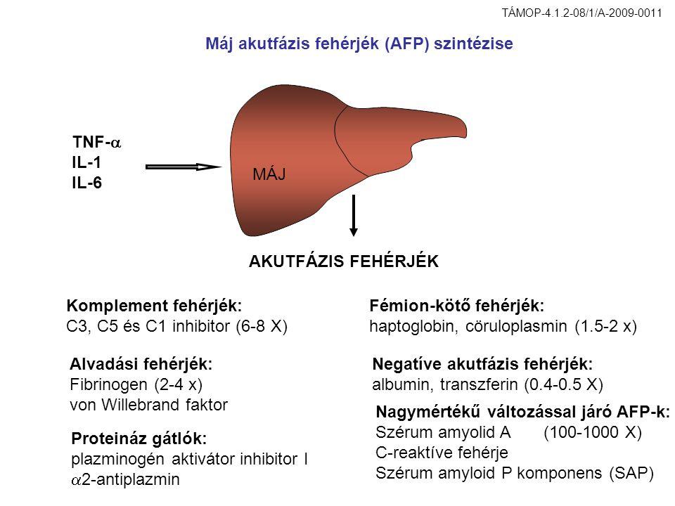 plazminogén aktivátor inhibitor I 2-antiplazmin Fémion-kötő fehérjék: