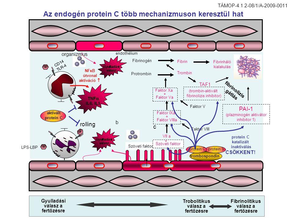 Az endogén protein C több mechanizmuson keresztül hat