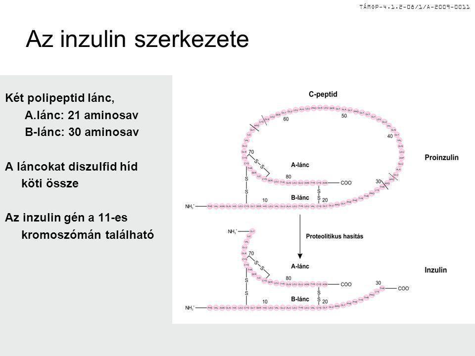 Az inzulin szerkezete Két polipeptid lánc, A.lánc: 21 aminosav